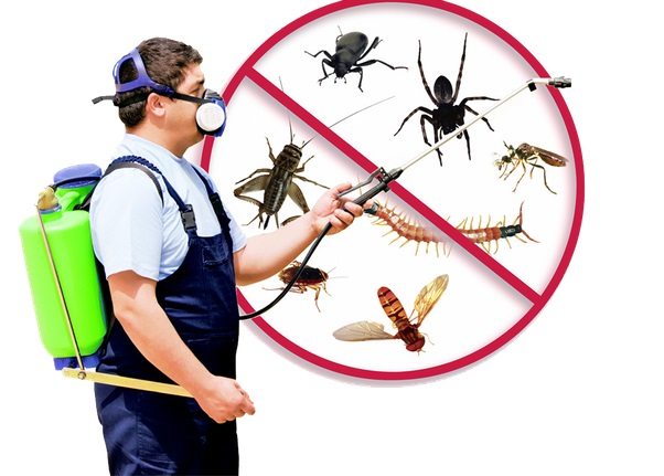 24 Hour Exterminators Near Me for Pest Control in Phoenix, AZ