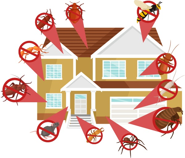 Affordable Exterminating Services Tampa, FL 33601