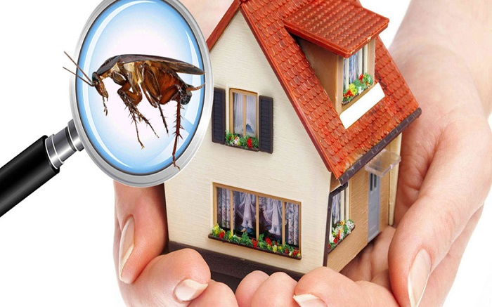 24 Hour Termite & Pest Control for Pest Control in Phoenix, AZ